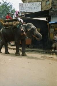 Eléphant Delhi, Inde