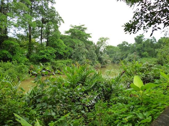 Rivière (Trat, Thaïlande)