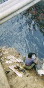 Chercheuse d'or, canal de Negombo Sri Lanka